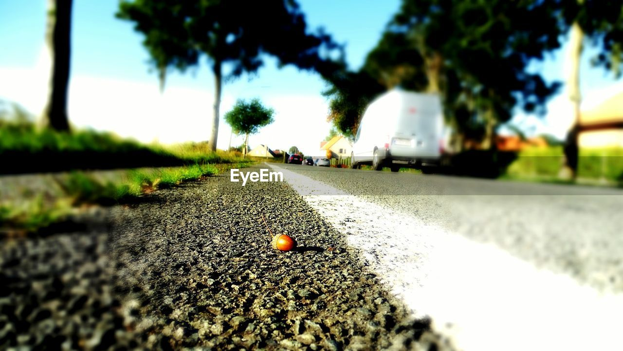 tree, the way forward, surface level, outdoors, selective focus, day, no people, nature, road, sky, close-up, beauty in nature