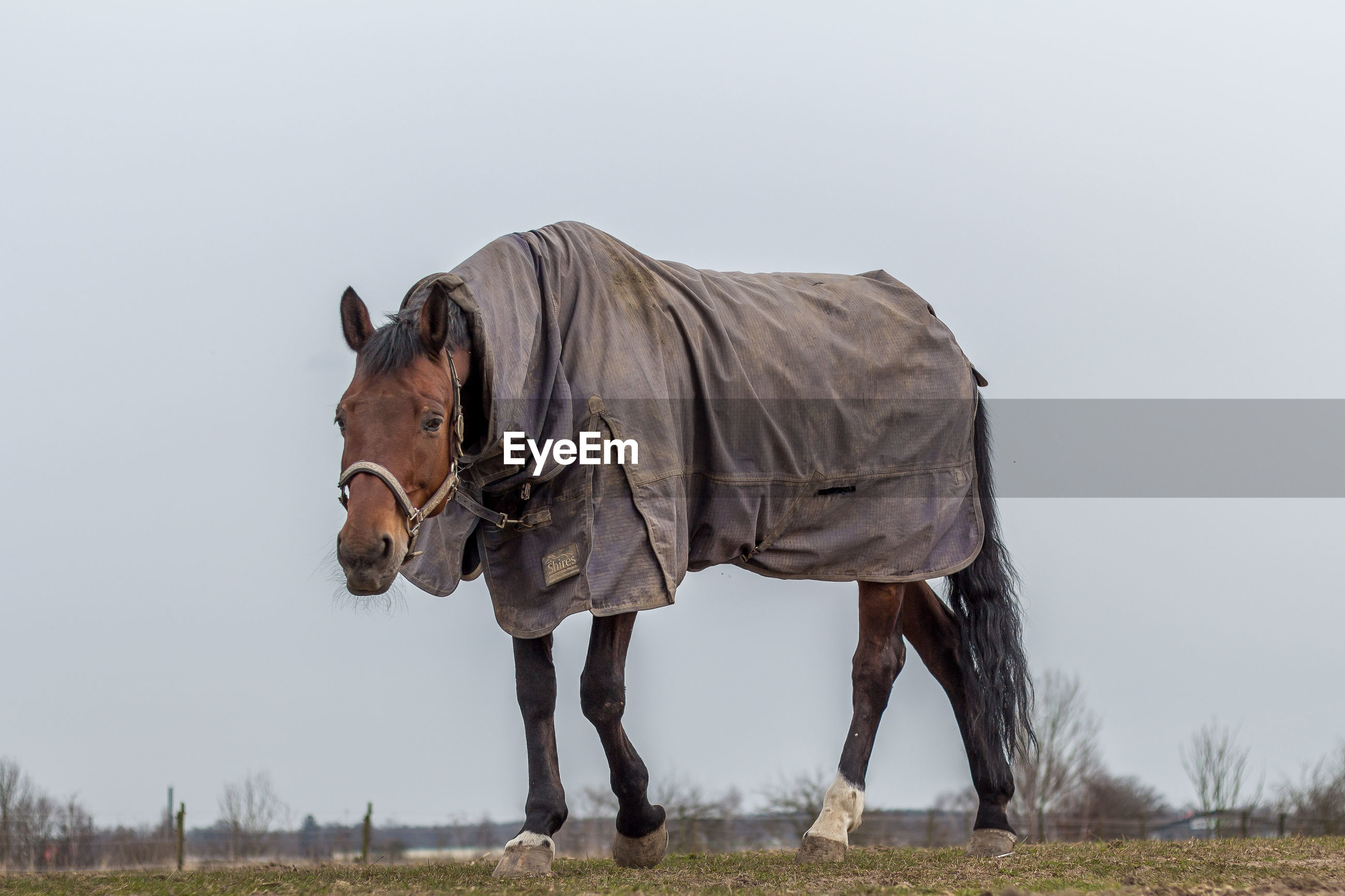 Horse with blanket walking on field against sky