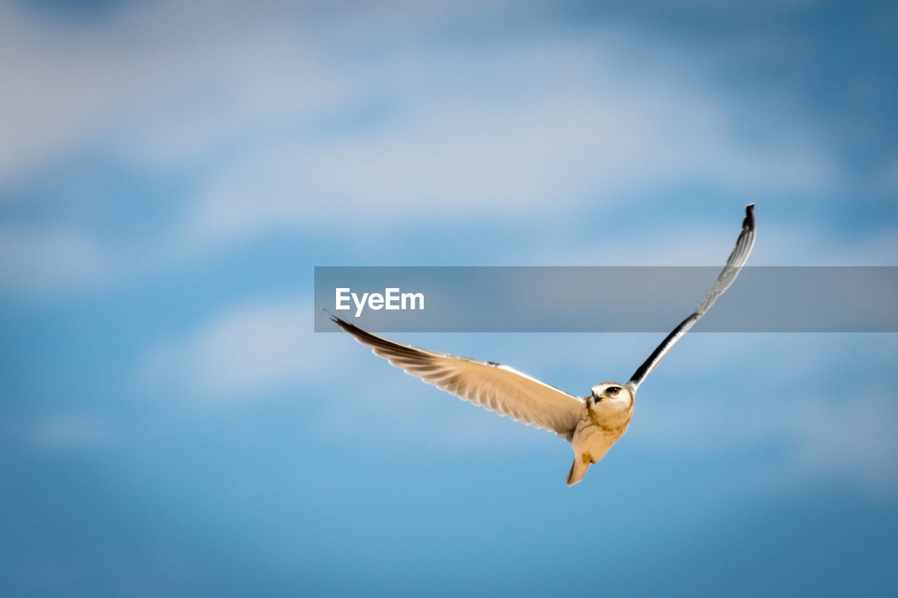 Close-Up Of Owl Flying Against Sky