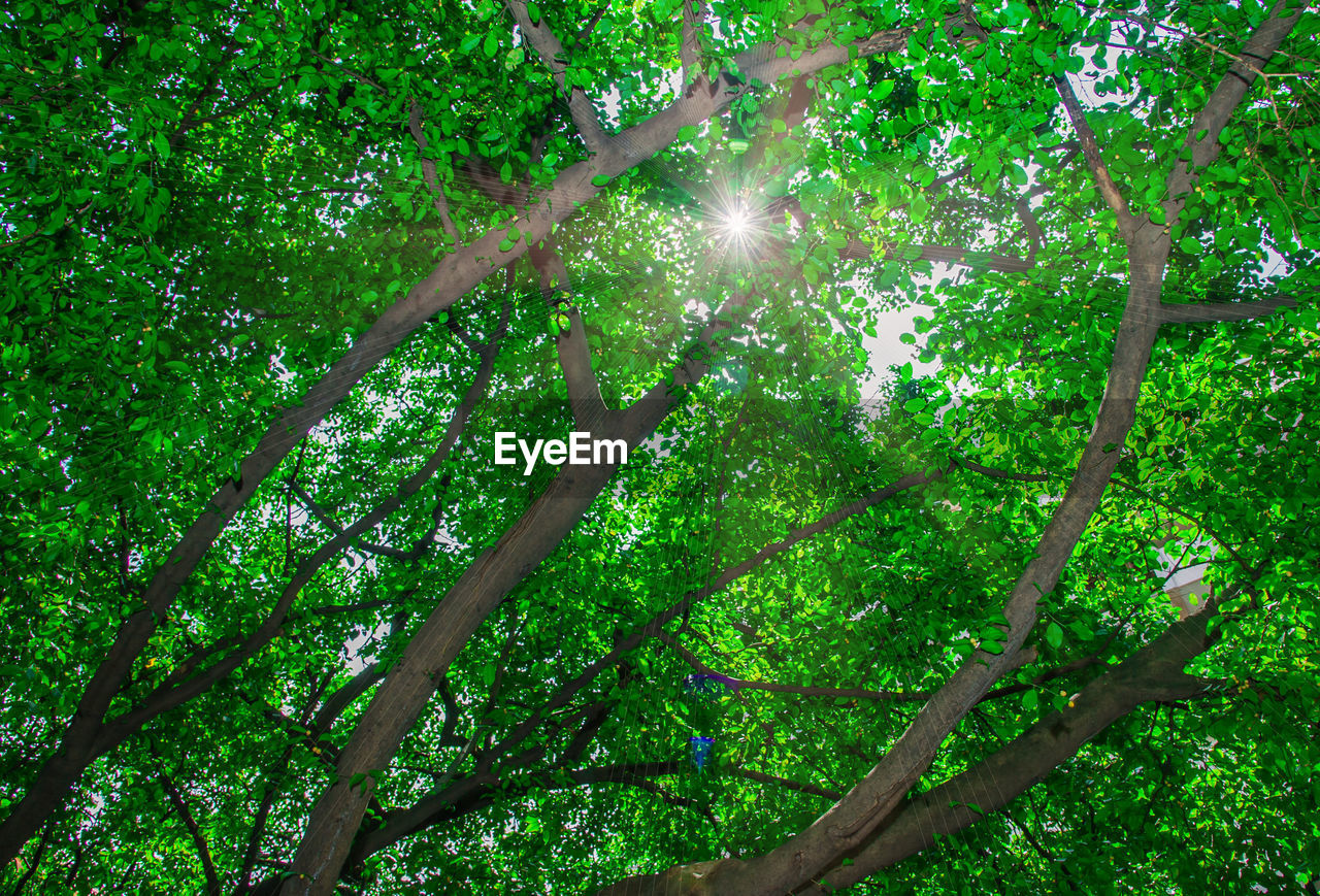 tree, nature, green color, branch, growth, low angle view, outdoors, forest, tranquility, beauty in nature, day, tranquil scene, no people, sunlight, scenics