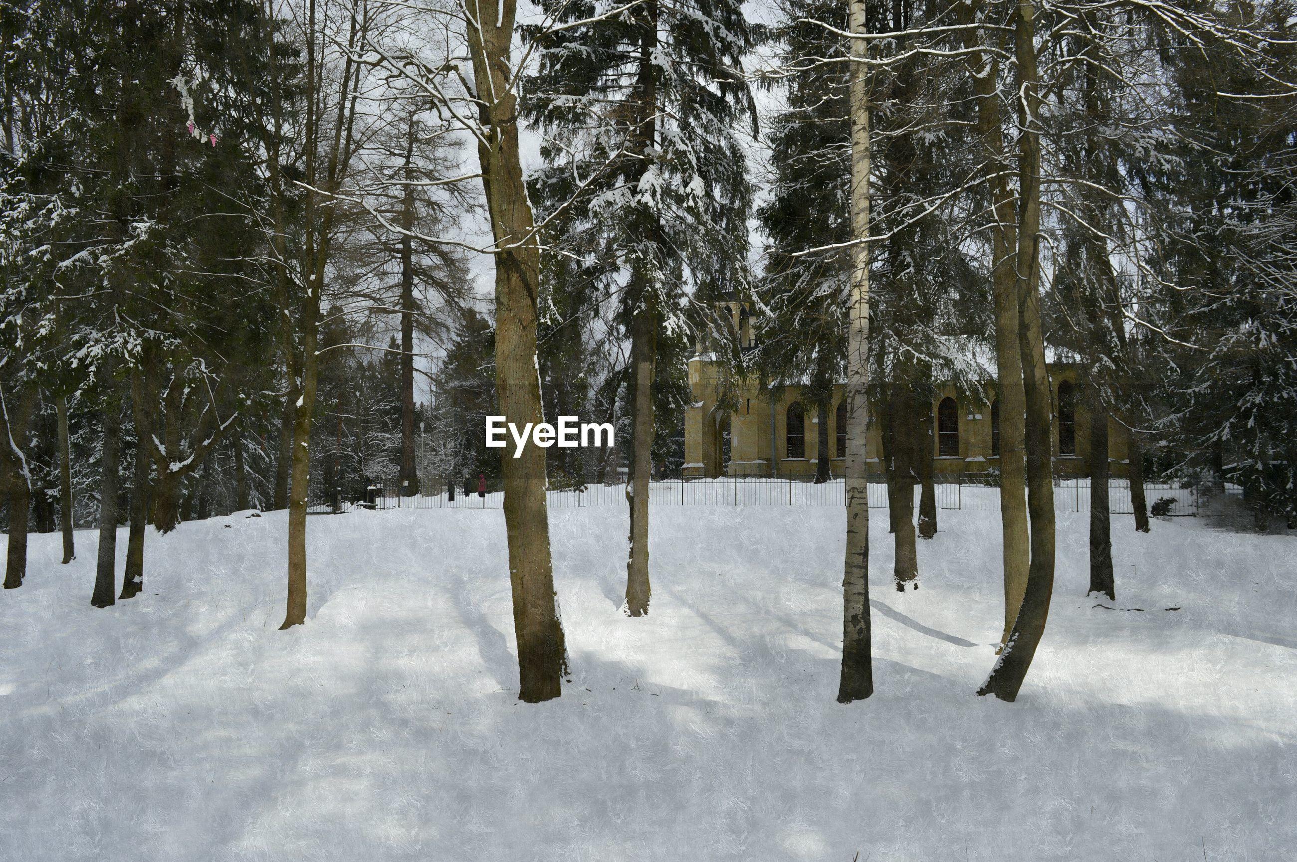 TREES ON SNOWY FIELD AGAINST SKY