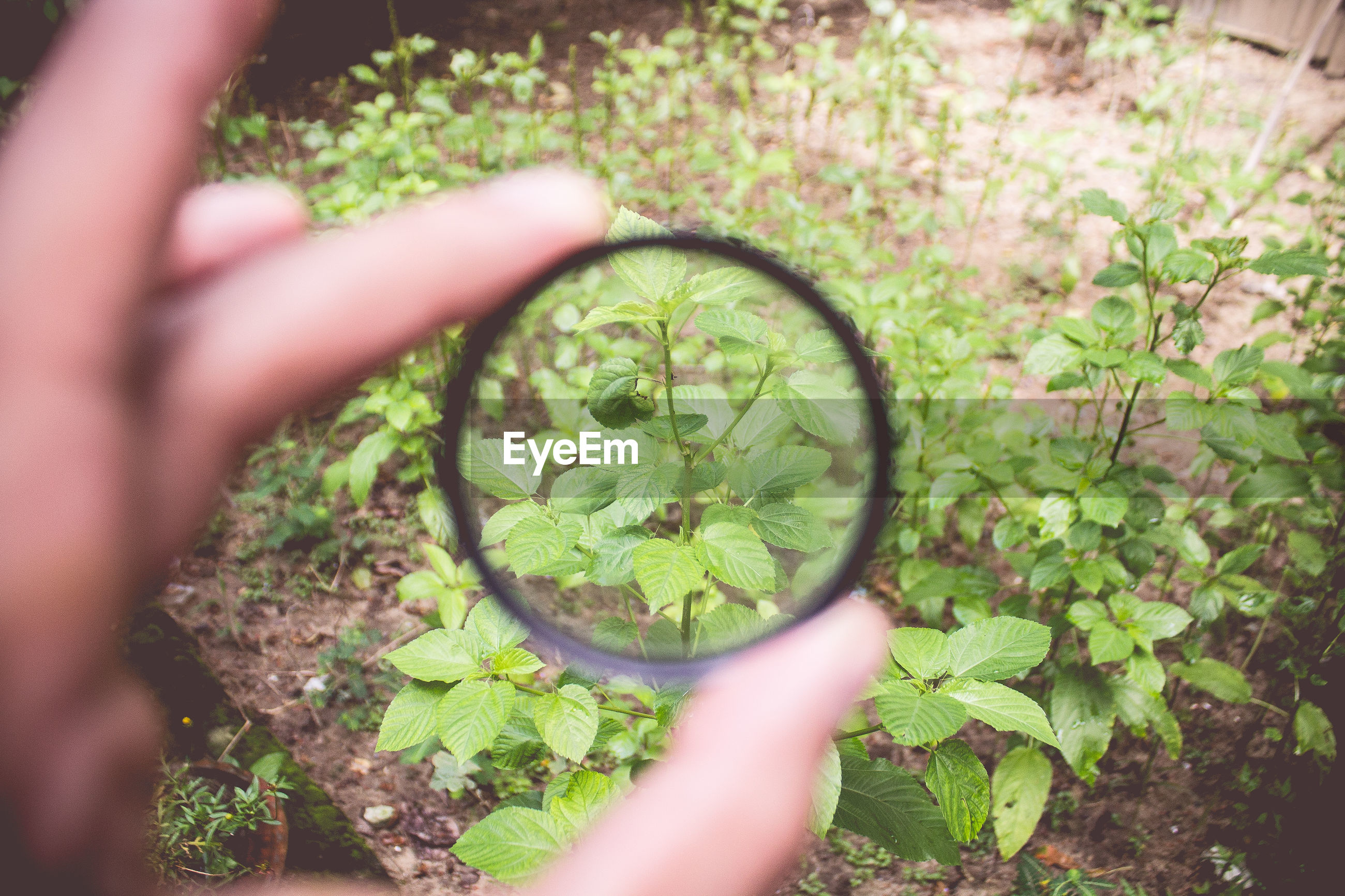 Cropped image of person holding magnifying glass against plant
