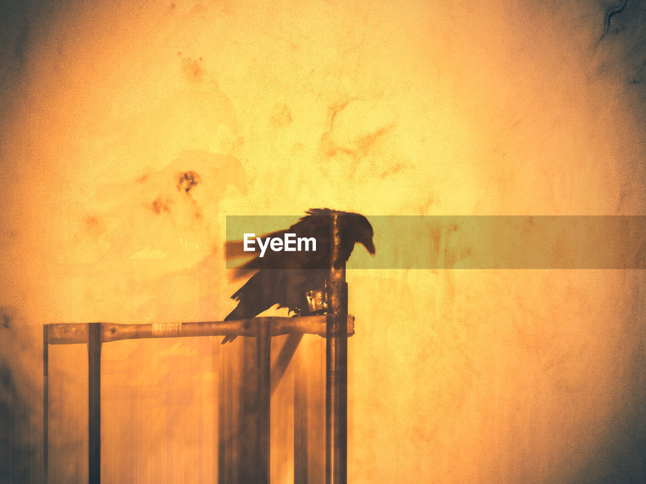 one animal, animal themes, animal, sunset, mammal, animal wildlife, no people, vertebrate, side view, orange color, sky, nature, wall - building feature, auto post production filter, silhouette, domestic animals, outdoors, architecture, domestic, animals in the wild