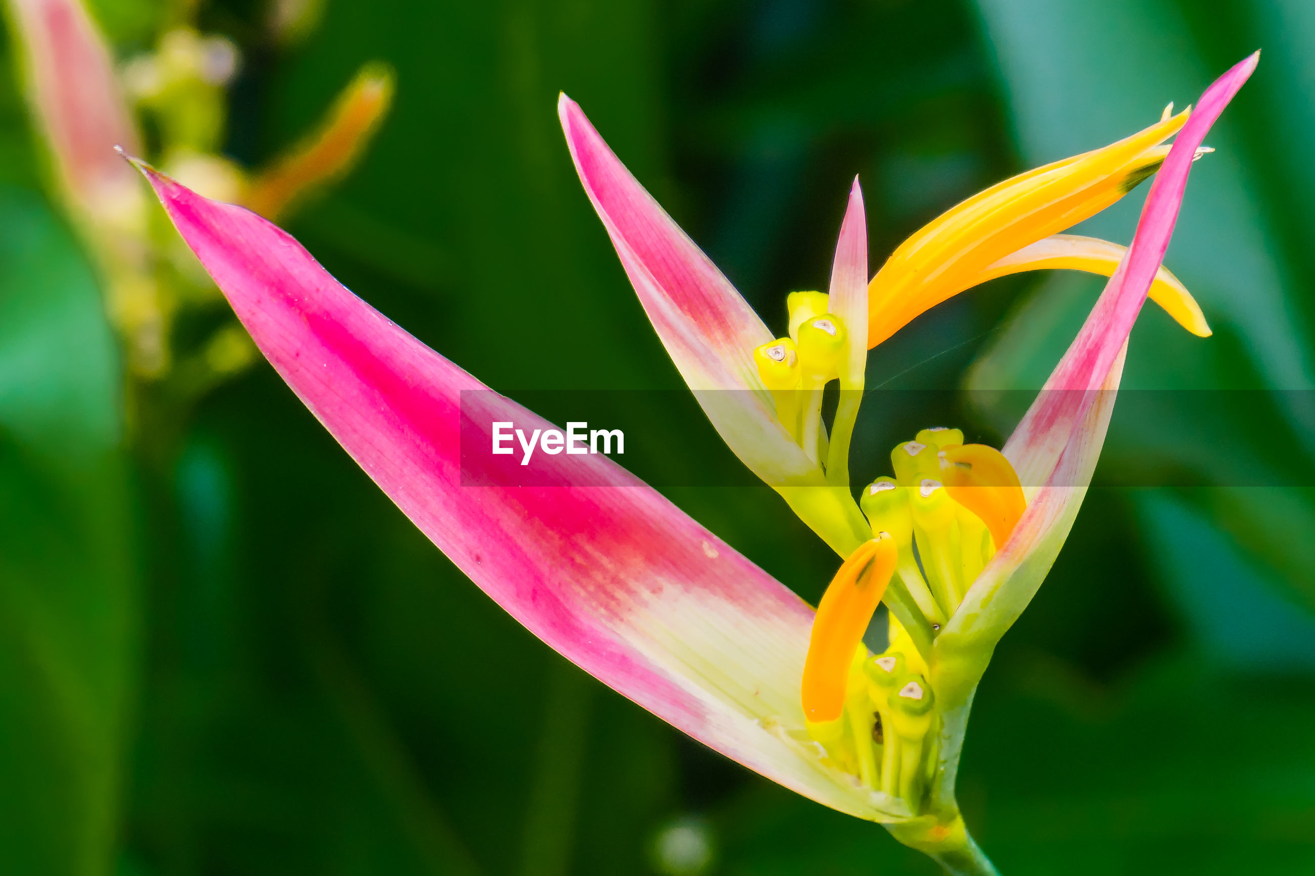 CLOSE-UP OF YELLOW LILY BLOOMING IN PLANT