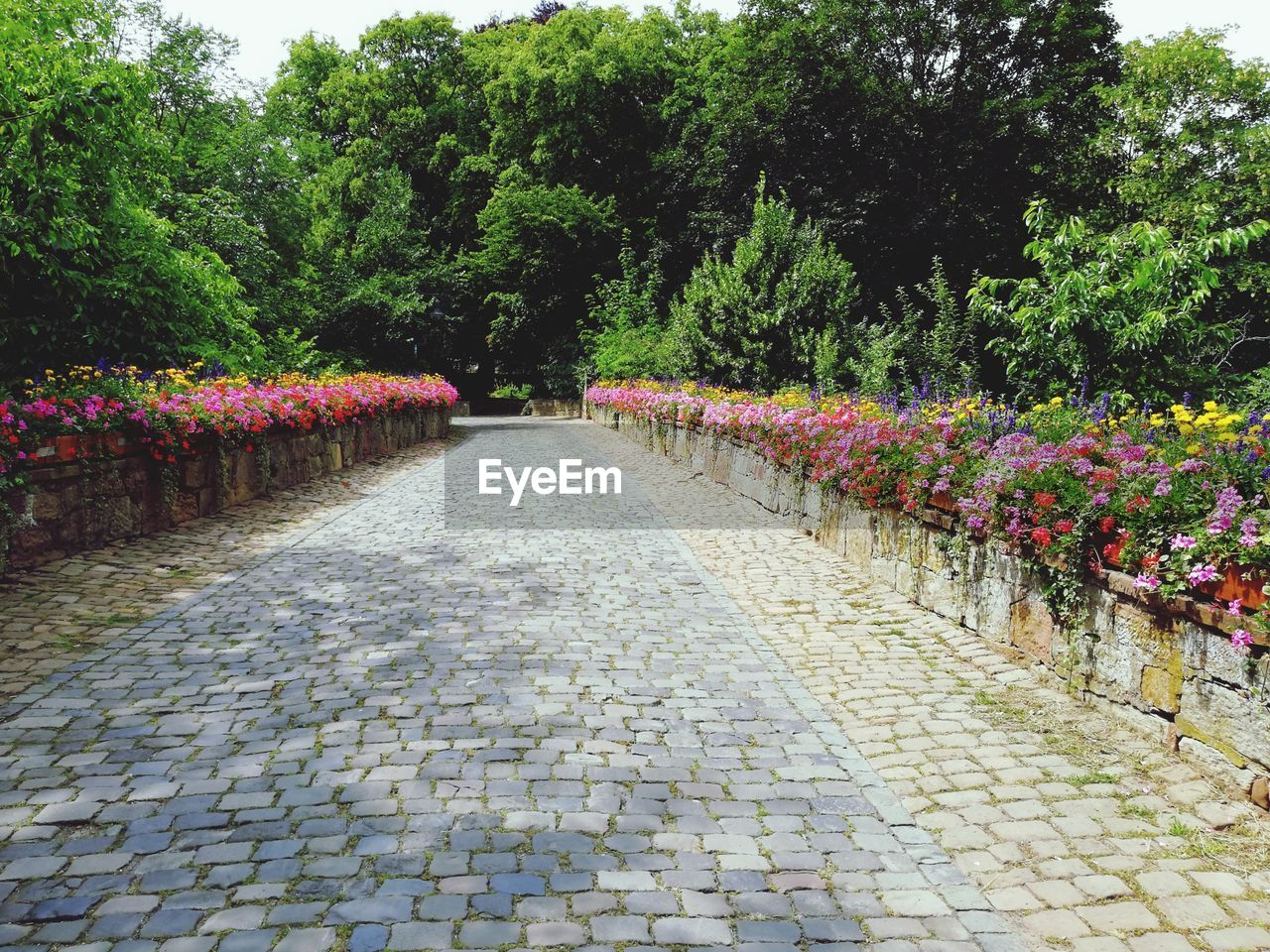 plant, tree, footpath, flower, flowering plant, growth, nature, direction, beauty in nature, day, the way forward, no people, park, outdoors, diminishing perspective, cobblestone, street, garden, park - man made space, green color, paving stone, flowerbed, garden path, treelined