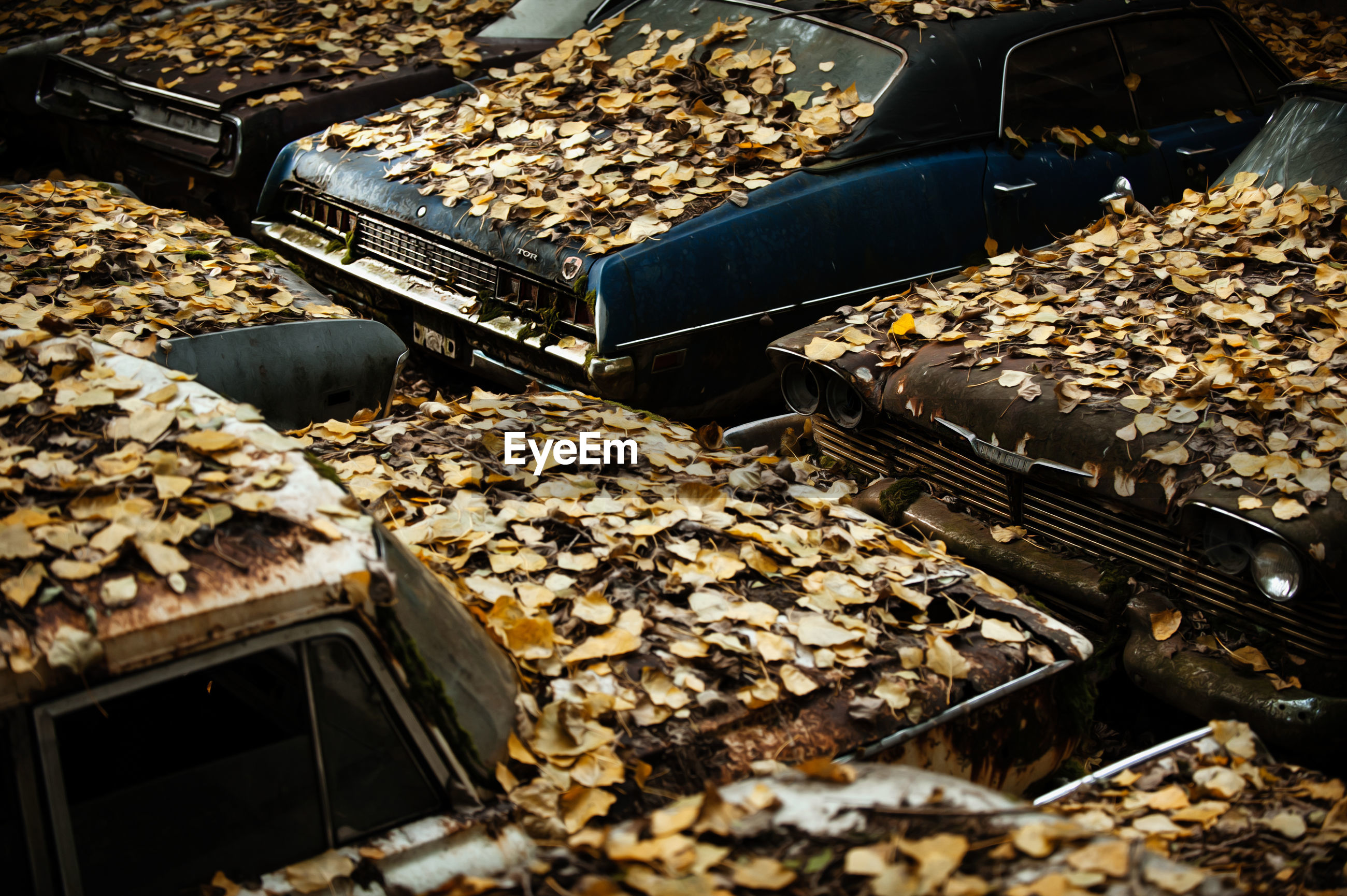 High angle view of dry leaves on abandoned cars