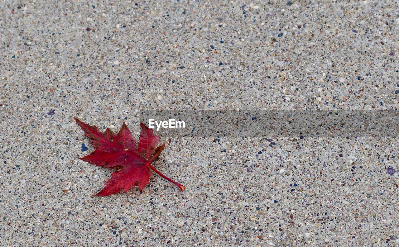 HIGH ANGLE VIEW OF MAPLE LEAF ON RED AUTUMN