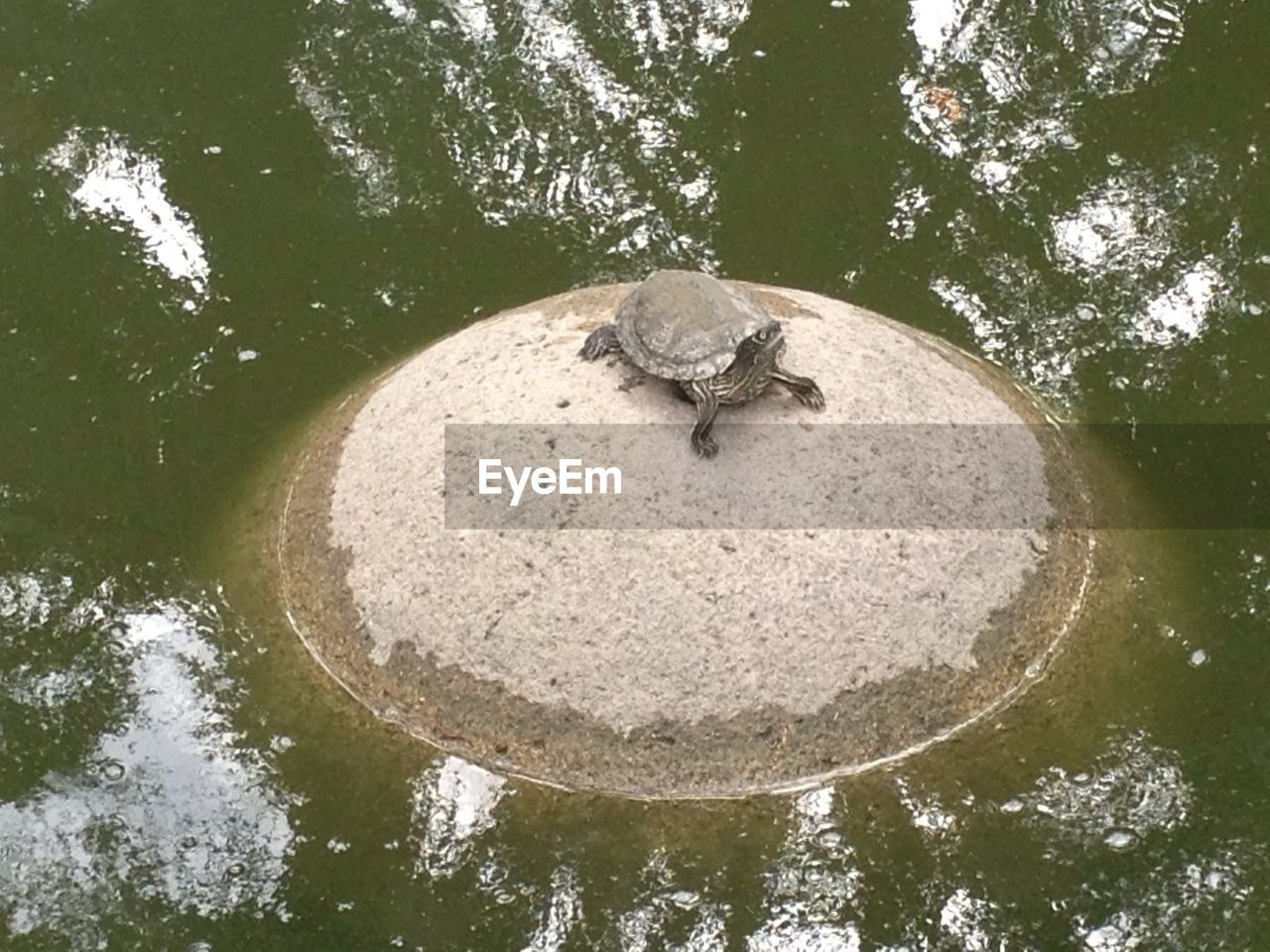 one animal, animal themes, animals in the wild, water, day, animal wildlife, nature, wildlife, no people, tree, reptile, outdoors, high angle view, waterfront, reflection, sea life, tortoise shell