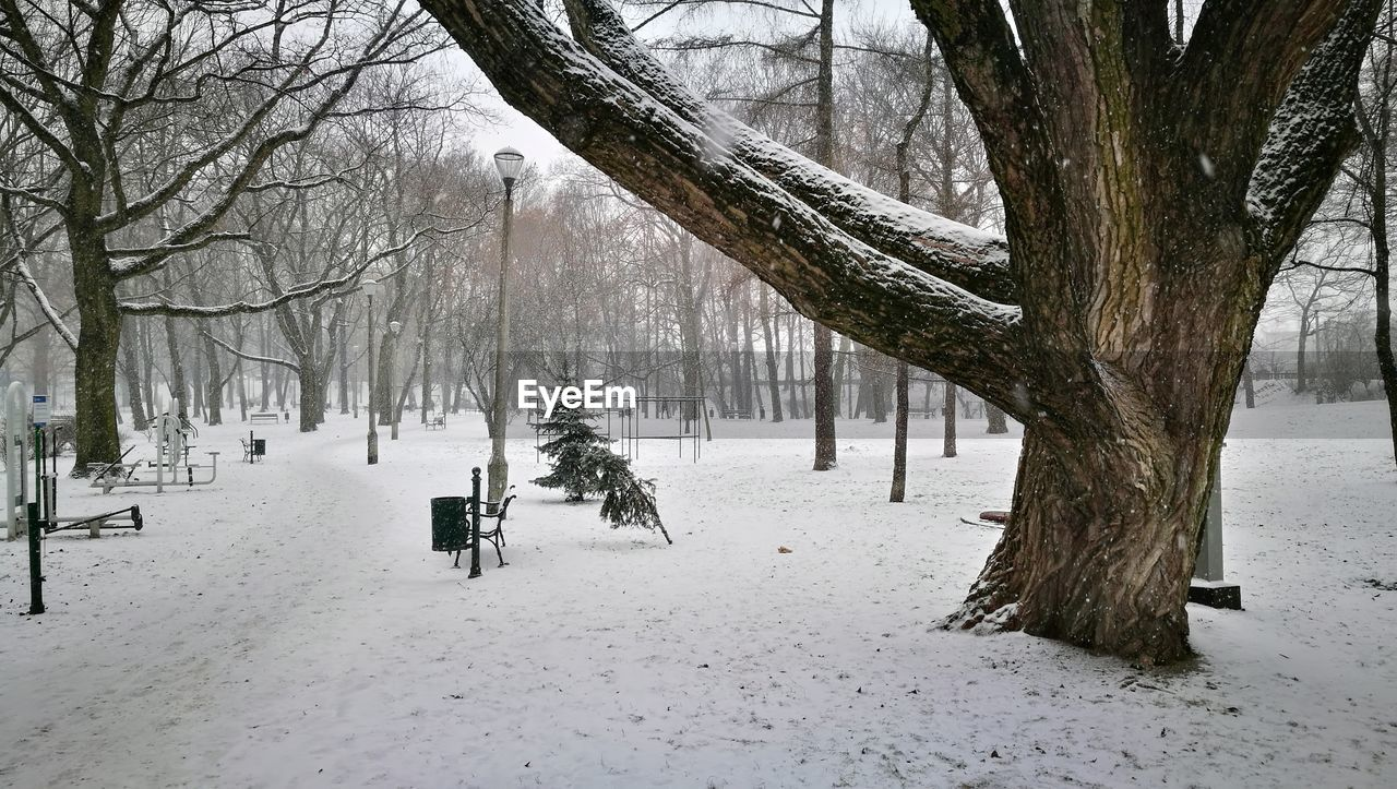 snow, winter, cold temperature, tree, plant, bare tree, covering, tree trunk, trunk, nature, day, land, field, beauty in nature, white color, tranquility, scenics - nature, frozen, branch, outdoors, warm clothing, extreme weather