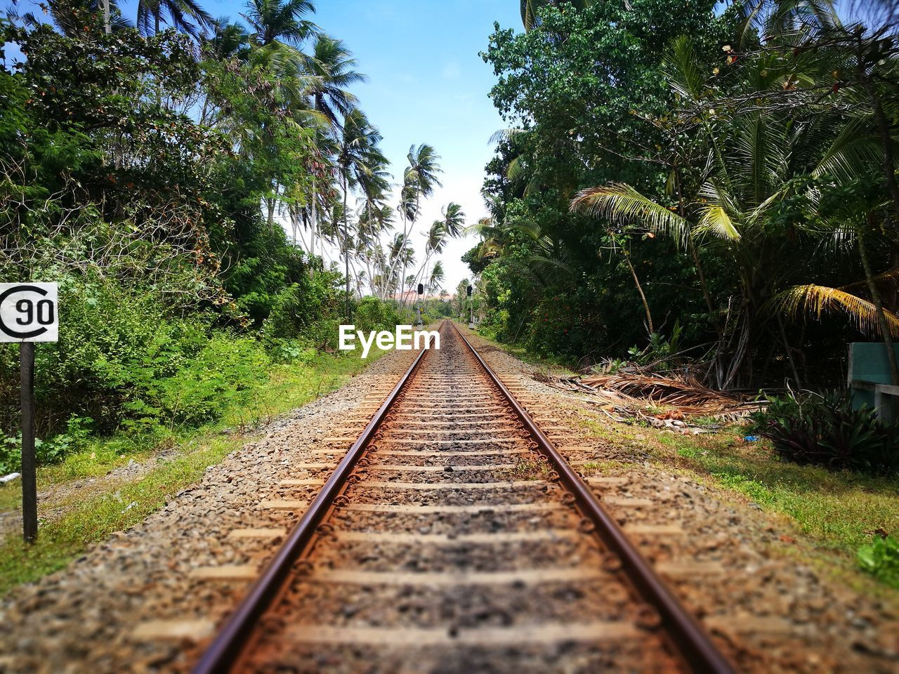 the way forward, direction, plant, transportation, tree, rail transportation, diminishing perspective, railroad track, track, sign, vanishing point, no people, nature, day, sky, growth, green color, communication, mode of transportation, outdoors, surface level, long, parallel
