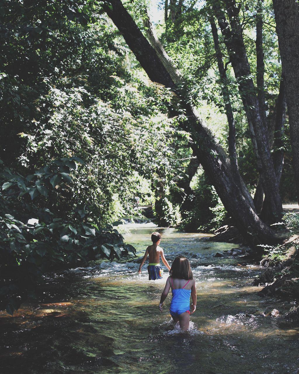Rear view of kids walking on stream in forest