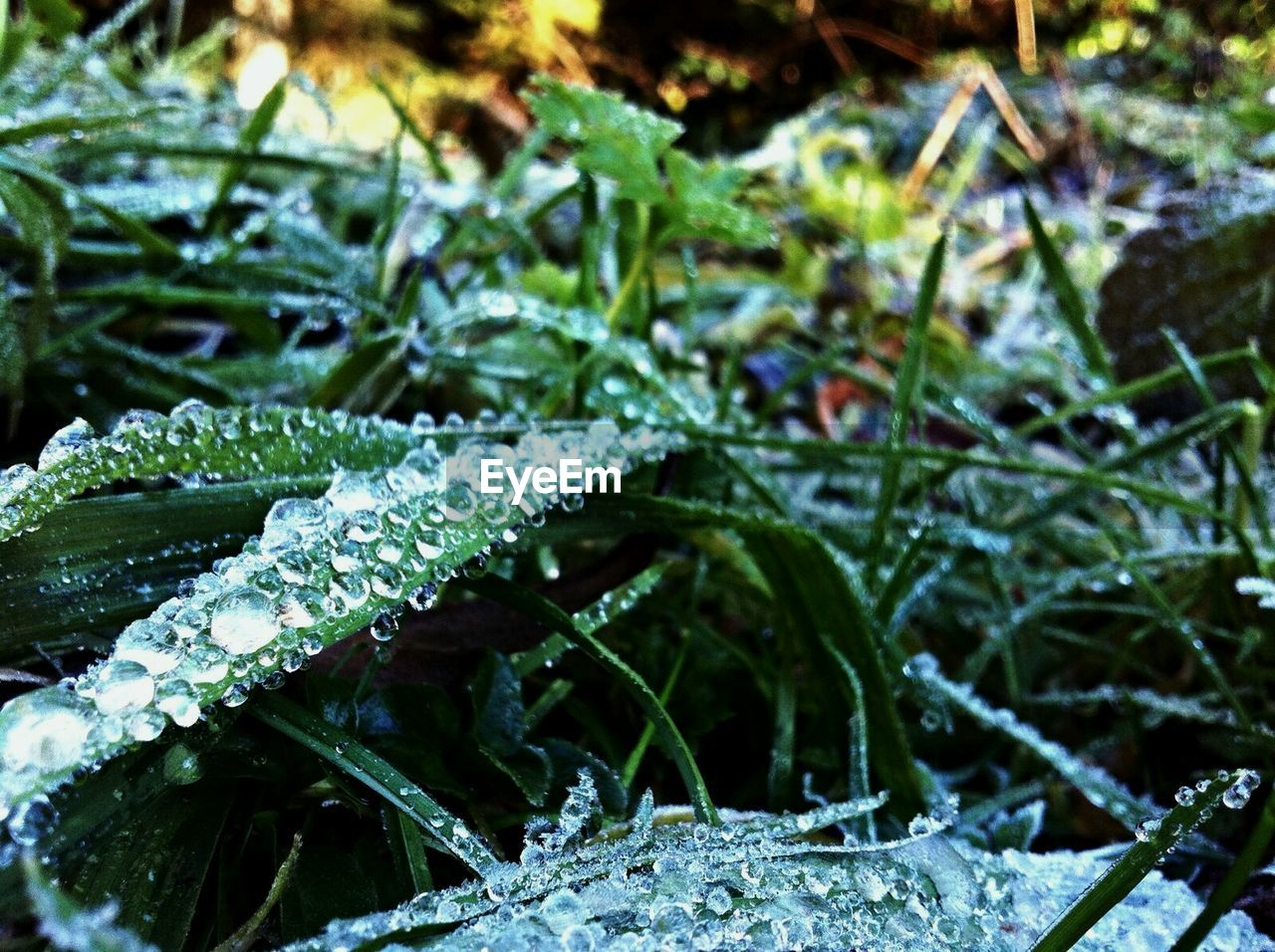 cold temperature, winter, nature, snow, weather, ice, plant, frozen, green color, beauty in nature, outdoors, drop, day, leaf, growth, frost, no people, close-up, water, focus on foreground, fragility, raindrop, ice crystal, freshness