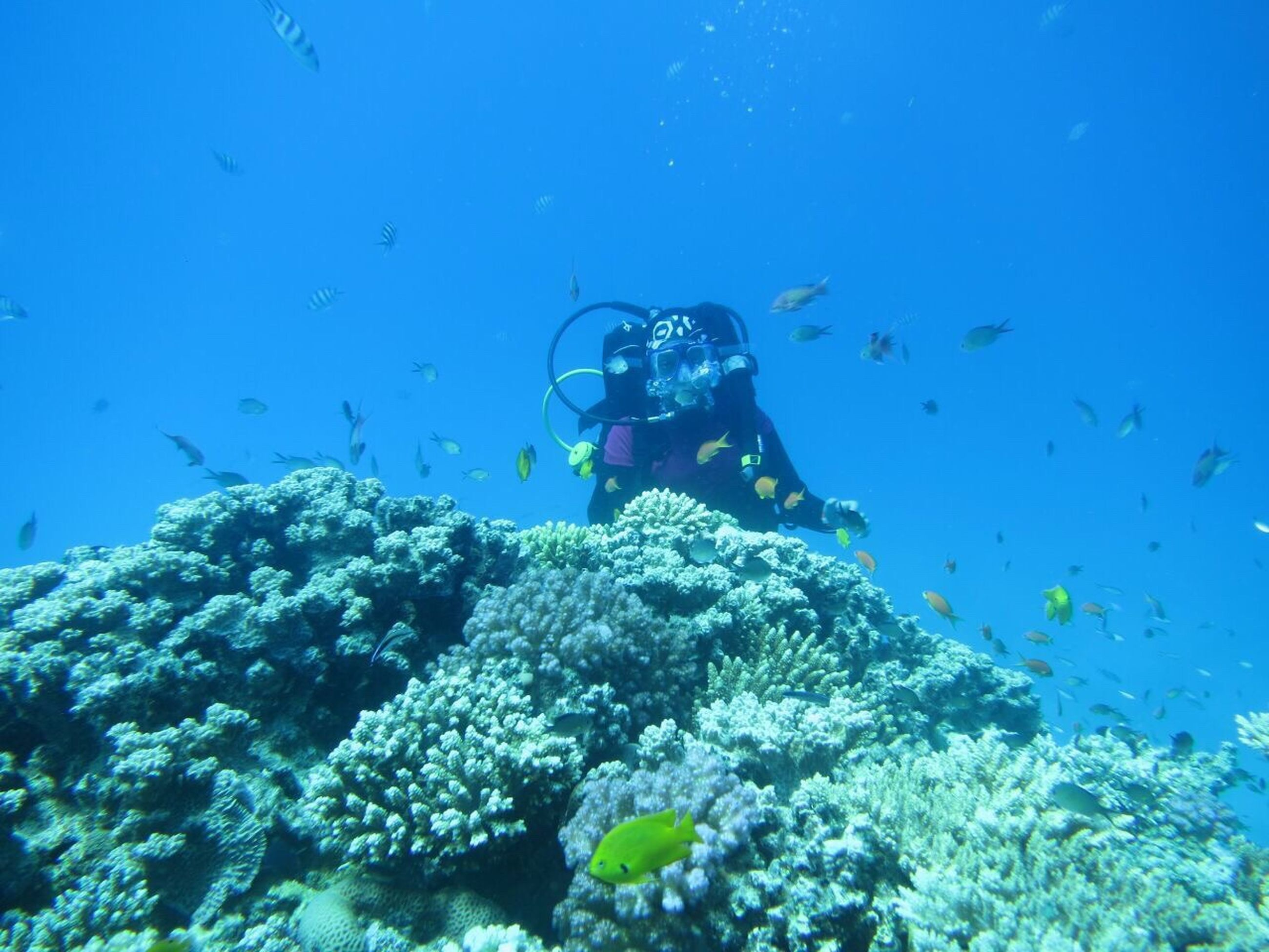 Man scuba diving in sea by coral reef