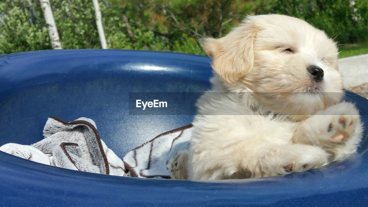 Close-up of puppy in tub