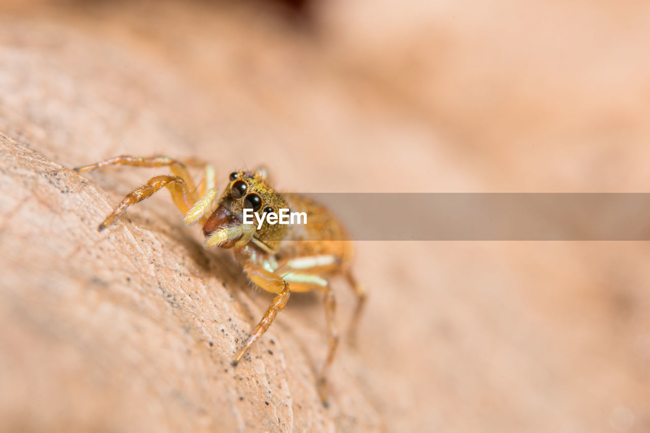 Close-up of spider on surface