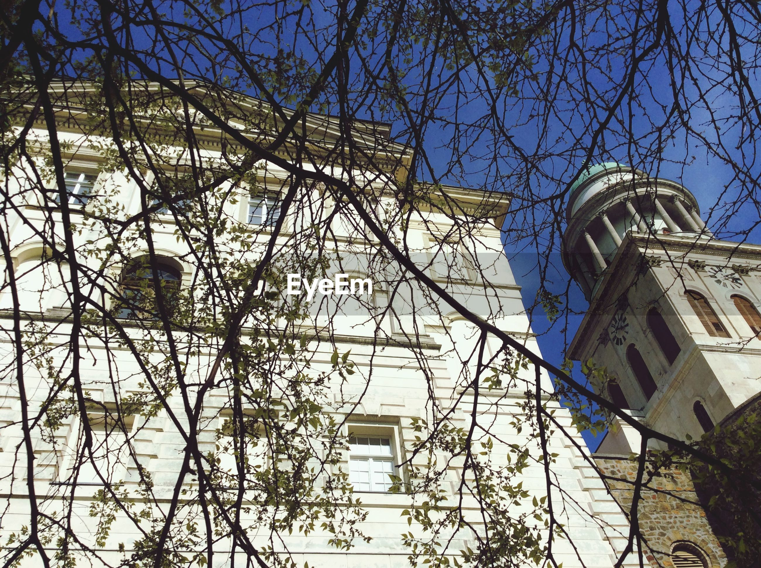 low angle view, architecture, built structure, building exterior, tree, bare tree, branch, clear sky, blue, sky, tower, day, no people, outdoors, building, sunlight, tall - high, high section, architectural feature, glass - material