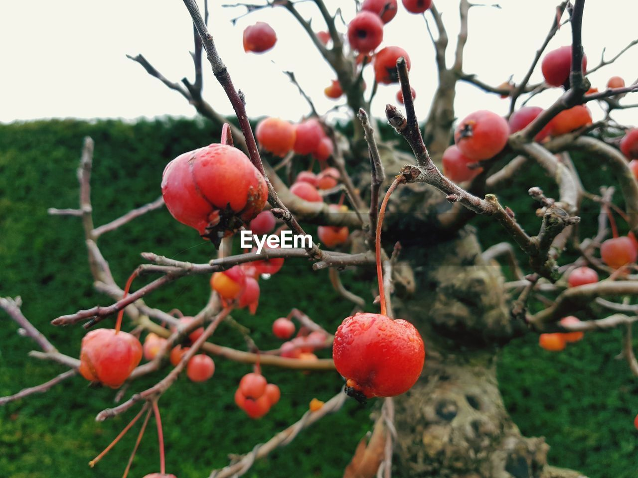 healthy eating, fruit, food, food and drink, growth, plant, tree, freshness, nature, day, focus on foreground, close-up, berry fruit, no people, red, branch, wellbeing, beauty in nature, rose hip, outdoors, ripe, rowanberry
