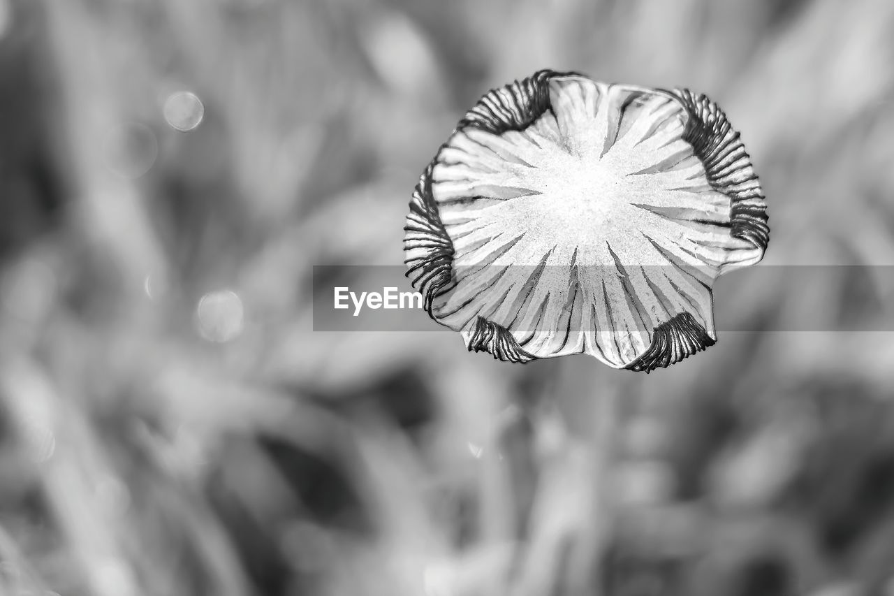 focus on foreground, nature, no people, day, outdoors, beauty in nature, close-up, fragility, flower, freshness, flower head