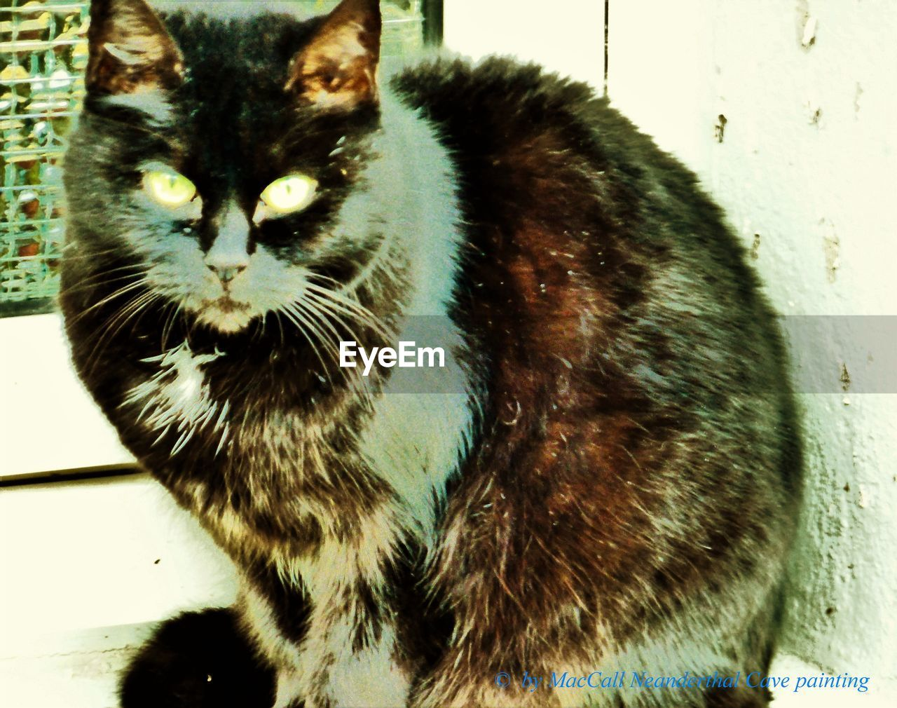 domestic cat, one animal, pets, domestic animals, animal themes, feline, mammal, no people, indoors, day, close-up