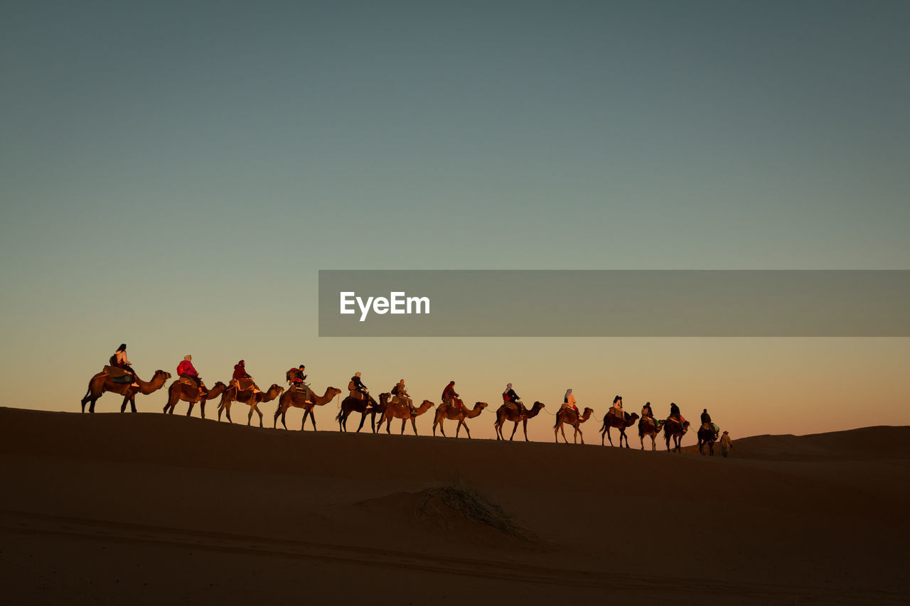 sky, copy space, group of animals, land, group of people, mammal, camel, domestic animals, desert, clear sky, real people, domestic, men, pets, sunset, nature, landscape, environment, arid climate, outdoors, climate, riding, herbivorous