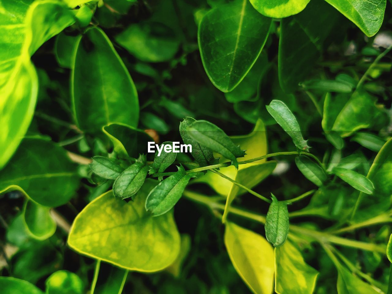 green color, growth, leaf, plant part, plant, close-up, no people, nature, day, beauty in nature, one animal, focus on foreground, freshness, food and drink, food, animal wildlife, invertebrate, animals in the wild, insect, animal themes, outdoors