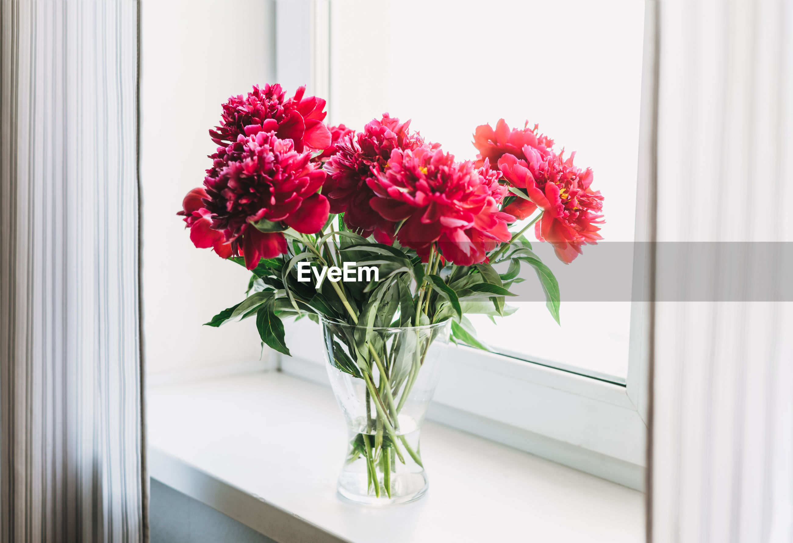 CLOSE-UP OF RED FLOWER VASE ON TABLE