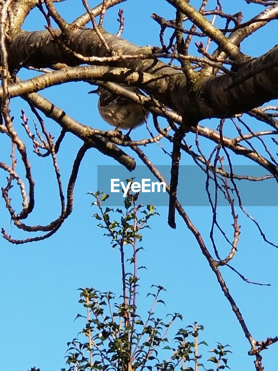 low angle view, tree, branch, clear sky, blue, day, outdoors, nature, no people, sky, growth, bare tree, sunlight, dead plant, beauty in nature, close-up