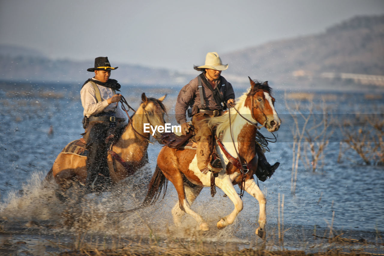 mammal, domestic animals, water, animal wildlife, domestic, real people, group of animals, nature, pets, horse, men, activity, ride, people, riding, hat, livestock, day, cowboy, outdoors, cowboy hat