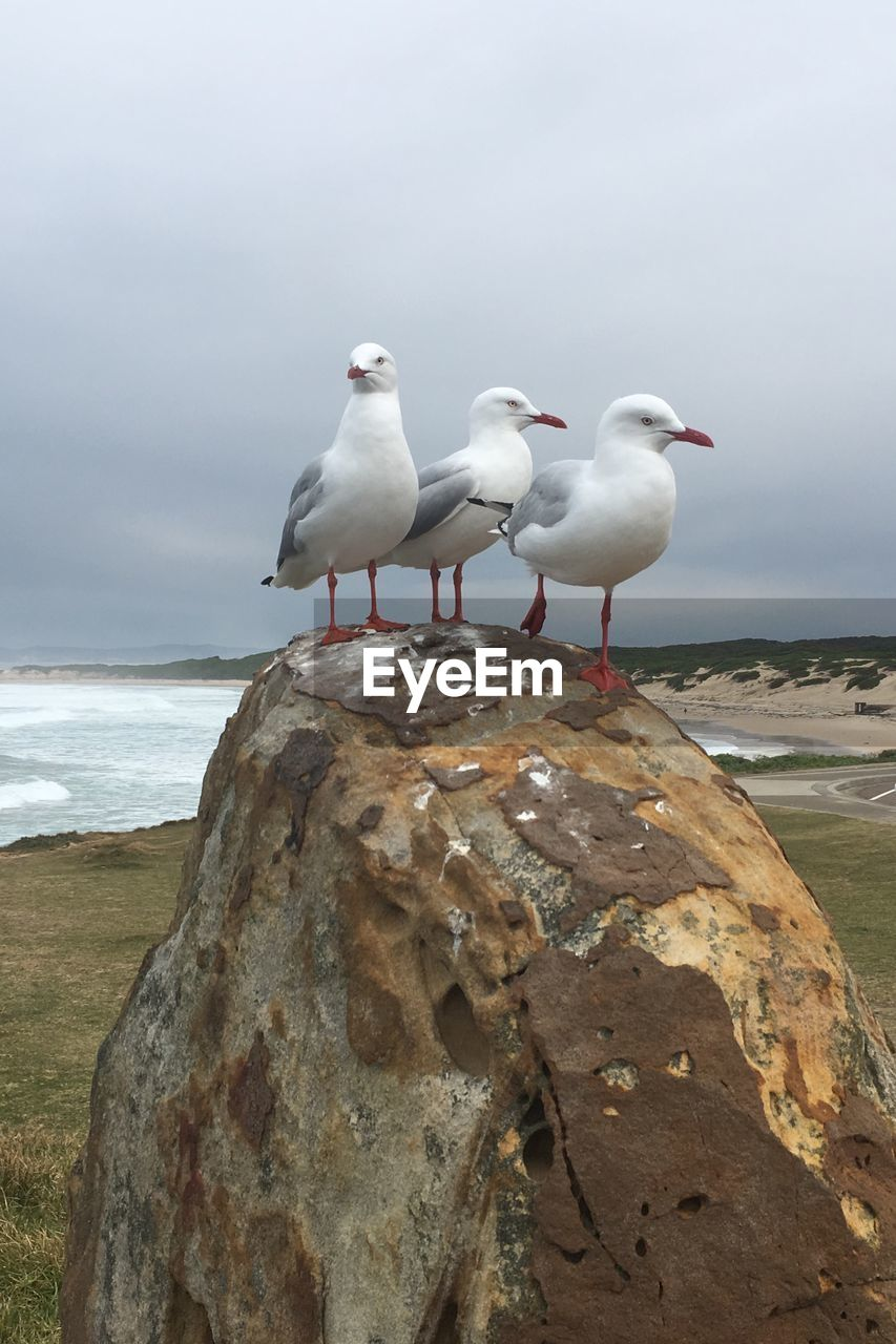 sea, water, beach, seagull, solid, land, rock - object, rock, vertebrate, perching, bird, animals in the wild, group of animals, animal, animal wildlife, animal themes, sky, day, horizon over water, sea bird, no people
