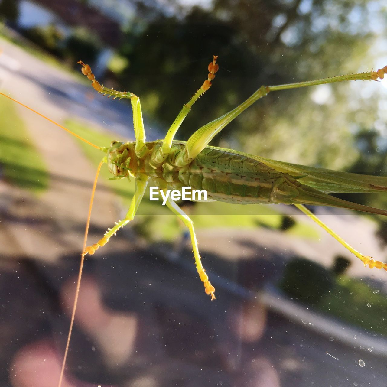 one animal, insect, animal themes, animals in the wild, no people, focus on foreground, close-up, animal wildlife, nature, day, green color, outdoors, leaf