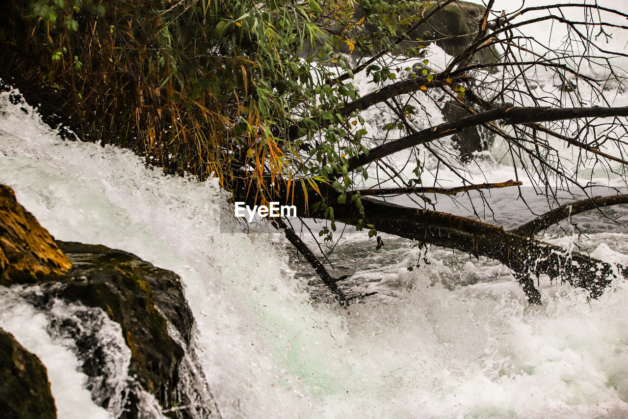 water, tree, plant, motion, beauty in nature, nature, flowing water, cold temperature, winter, snow, no people, river, day, waterfall, scenics - nature, forest, outdoors, long exposure, flowing, power in nature, stream - flowing water