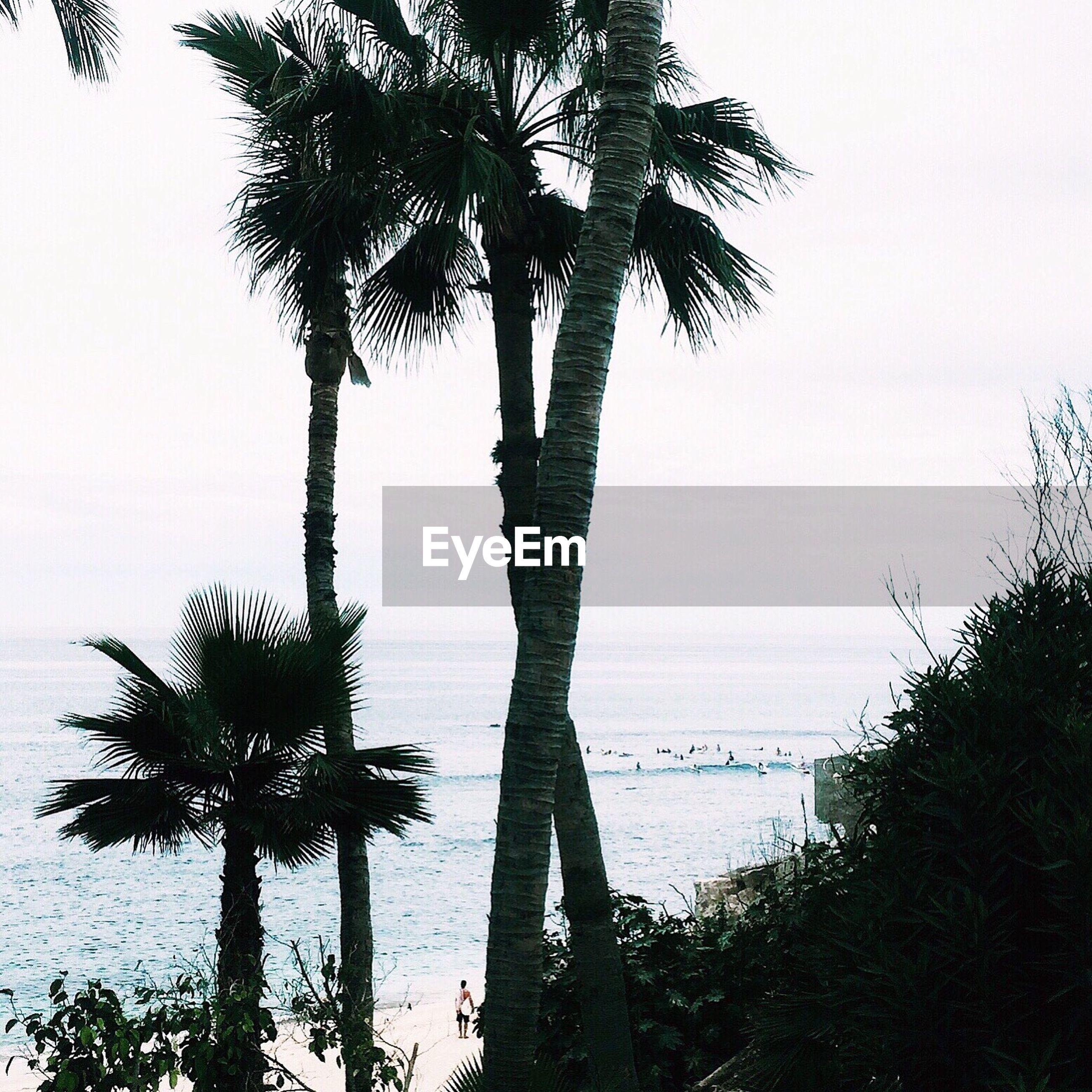 SILHOUETTE PALM TREES ON BEACH AGAINST CLEAR SKY