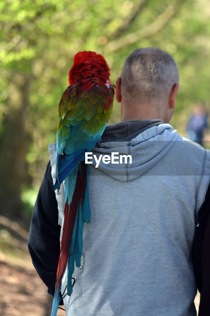 REAR VIEW OF MAN WITH PARROT IN PARK