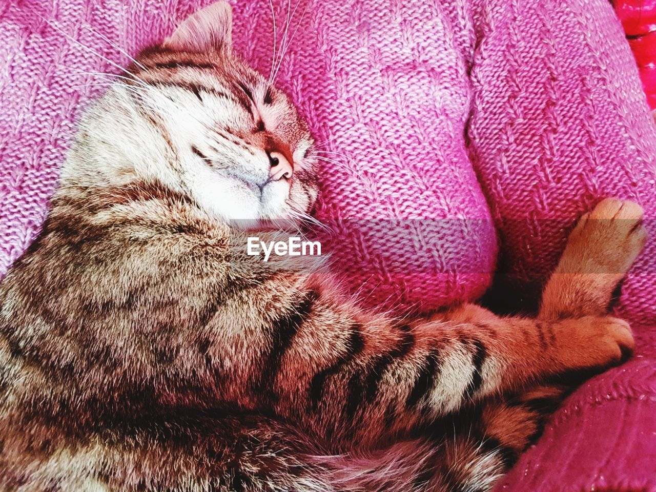 domestic cat, domestic animals, pets, one animal, animal themes, mammal, indoors, feline, sleeping, no people, relaxation, close-up, day