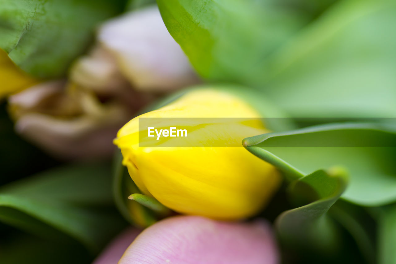 flower, freshness, beauty in nature, yellow, fragility, petal, leaf, growth, nature, green color, close-up, plant, flower head, outdoors, day, blooming, no people