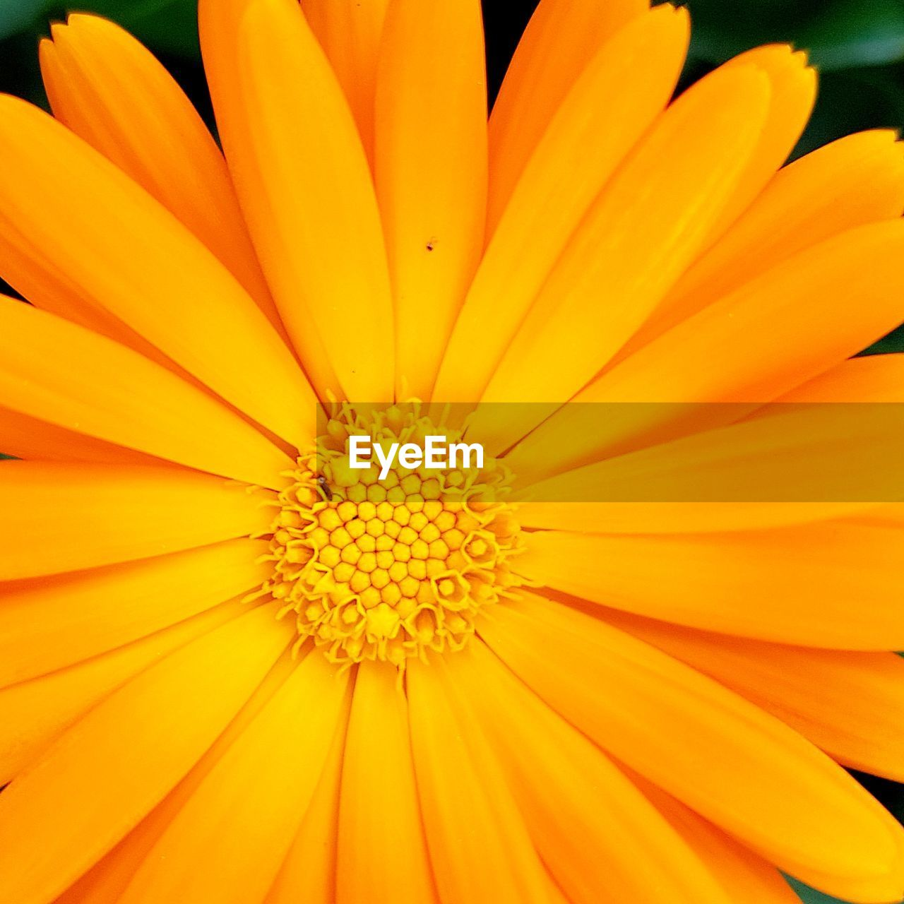 Full Frame Shot Of Yellow Flower