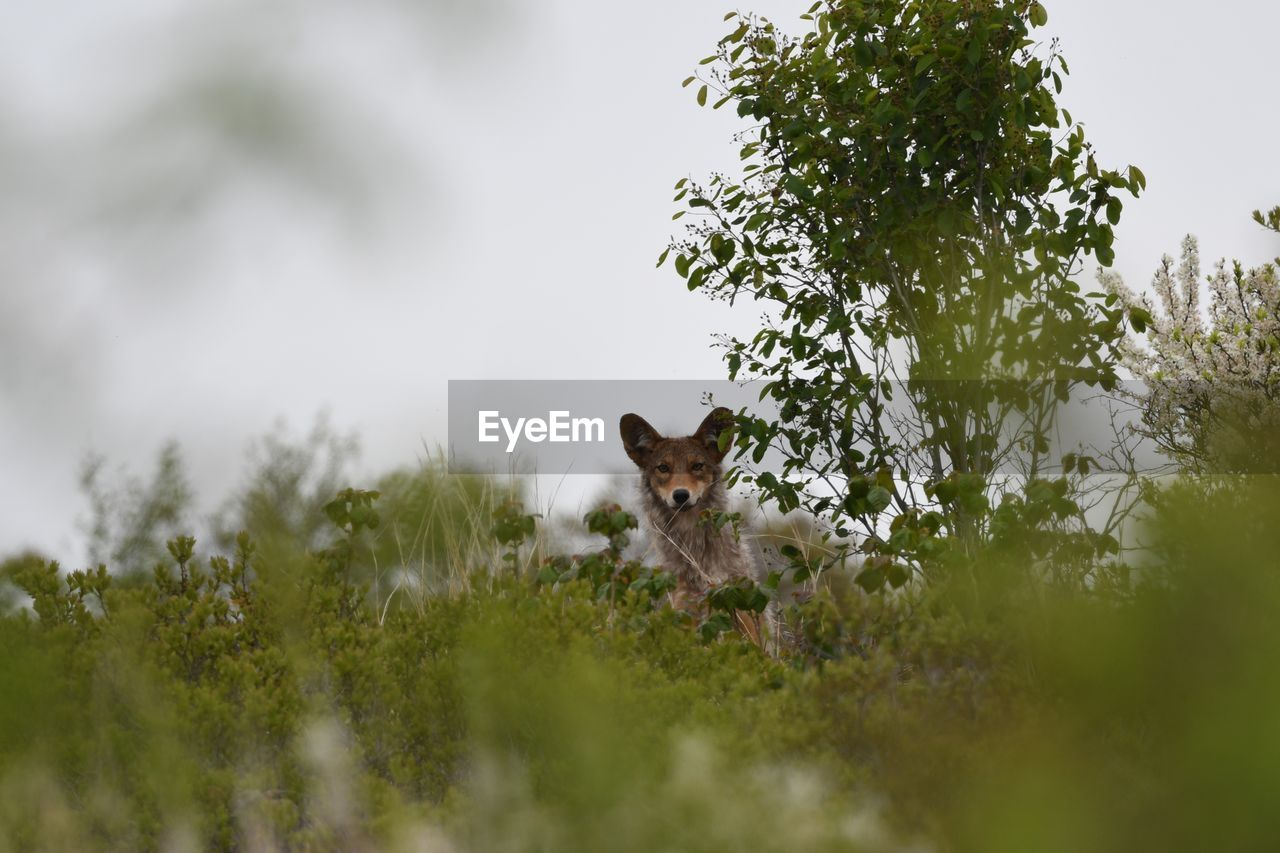 mammal, plant, animal, animal themes, one animal, tree, domestic animals, vertebrate, nature, pets, animal wildlife, domestic, no people, selective focus, growth, animals in the wild, day, land, looking at camera, portrait, outdoors