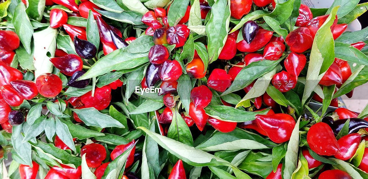 red, full frame, food and drink, backgrounds, food, spice, vegetable, chili pepper, freshness, pepper, green color, wellbeing, healthy eating, abundance, no people, close-up, large group of objects, red chili pepper, still life, ingredient, ripe