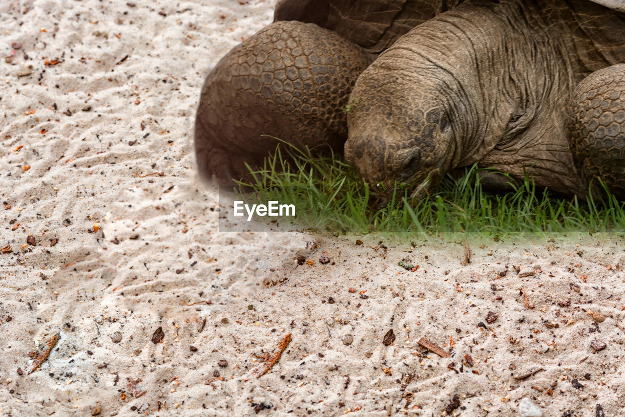 one animal, animals in the wild, animal themes, sand, animal wildlife, no people, lying down, mammal, outdoors, day, nature, close-up