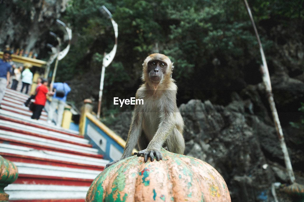 Monkey On Steps