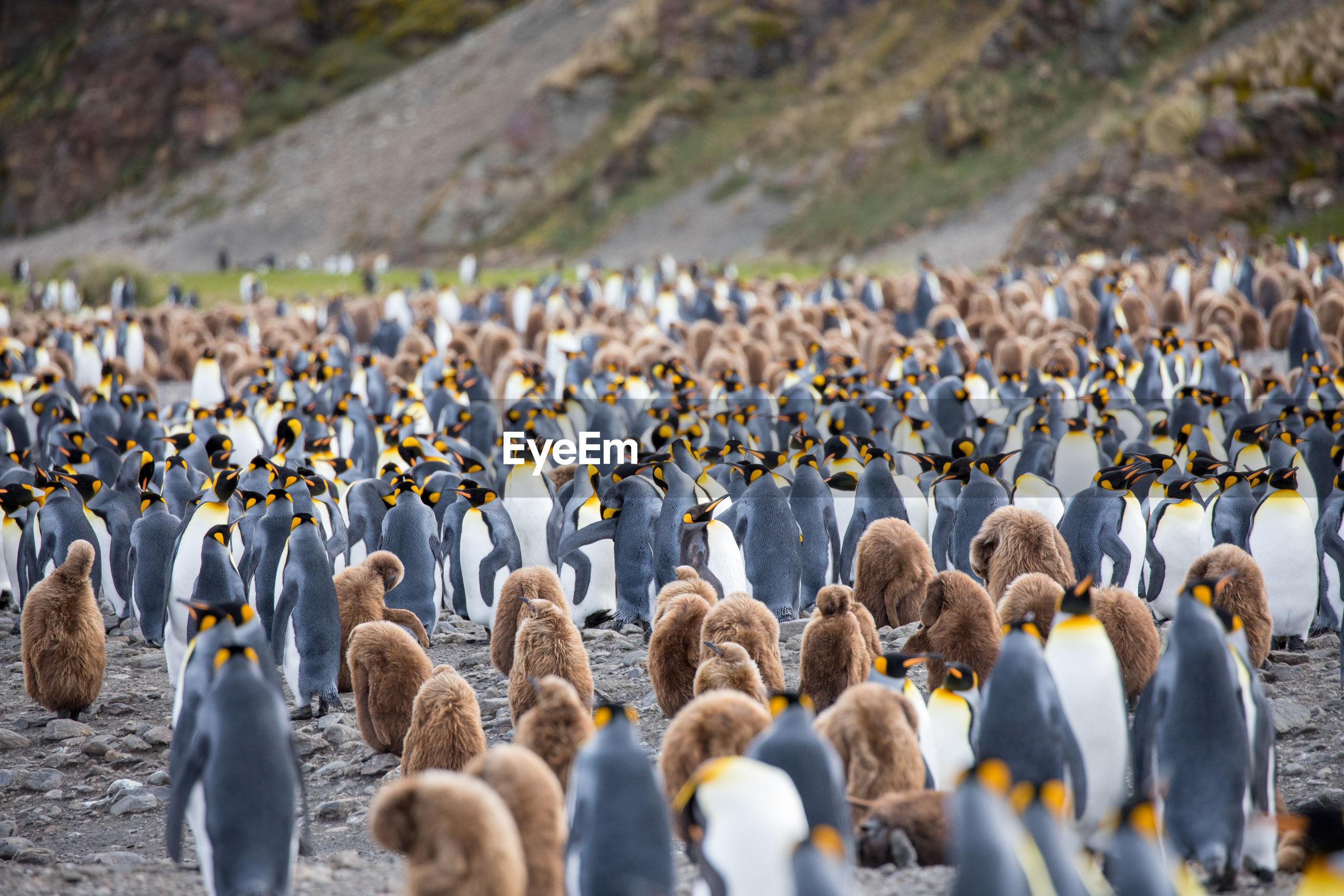 Penguins on field