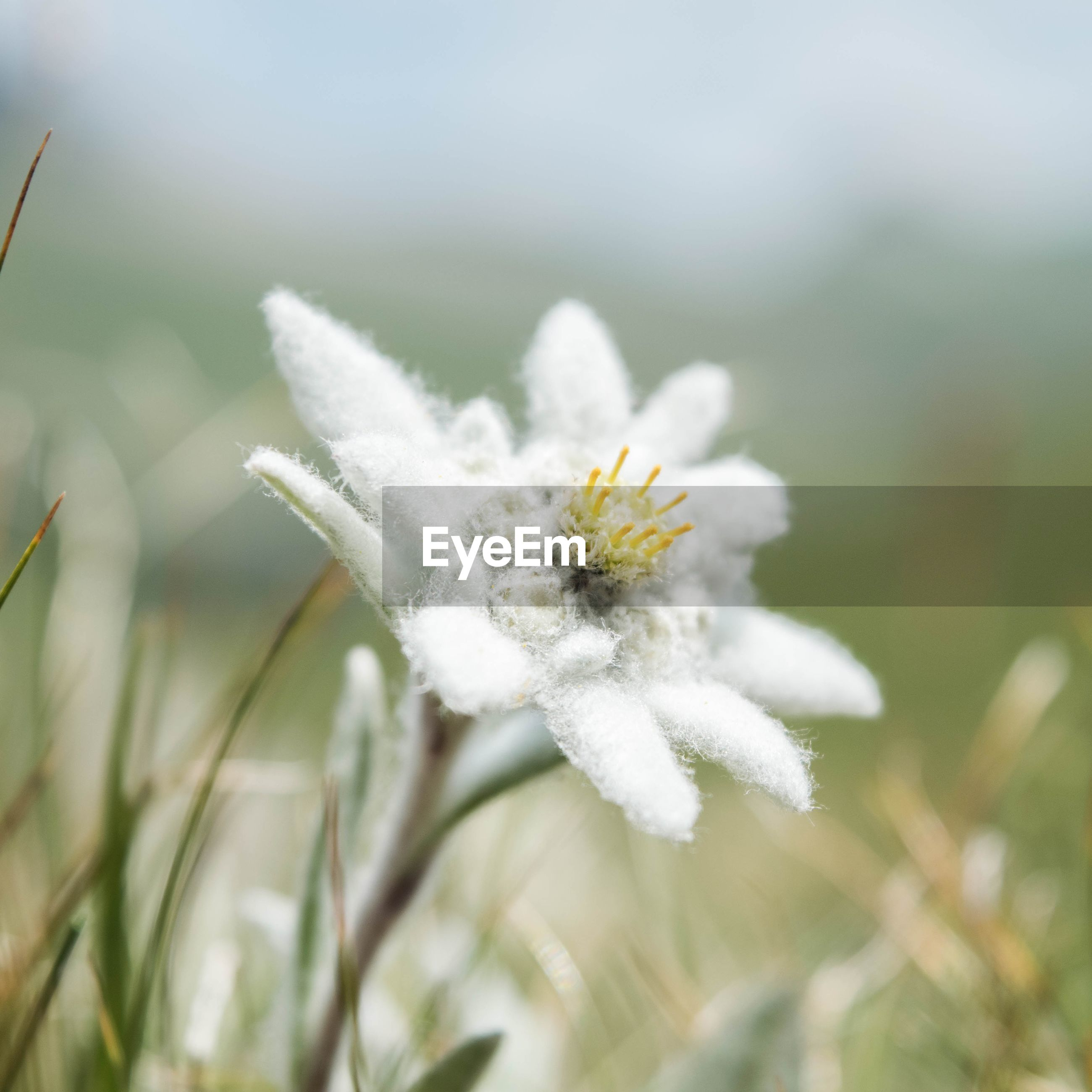flower, fragility, flower head, freshness, petal, white color, focus on foreground, close-up, growth, beauty in nature, single flower, nature, one animal, blooming, pollen, plant, insect, yellow, animal themes, selective focus