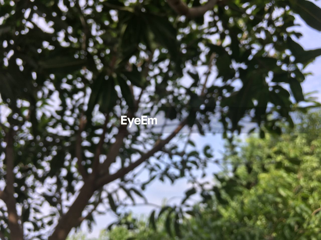 tree, plant, growth, low angle view, branch, beauty in nature, nature, day, no people, selective focus, outdoors, tranquility, land, leaf, green color, plant part, sky, forest, focus on foreground, close-up, tree canopy