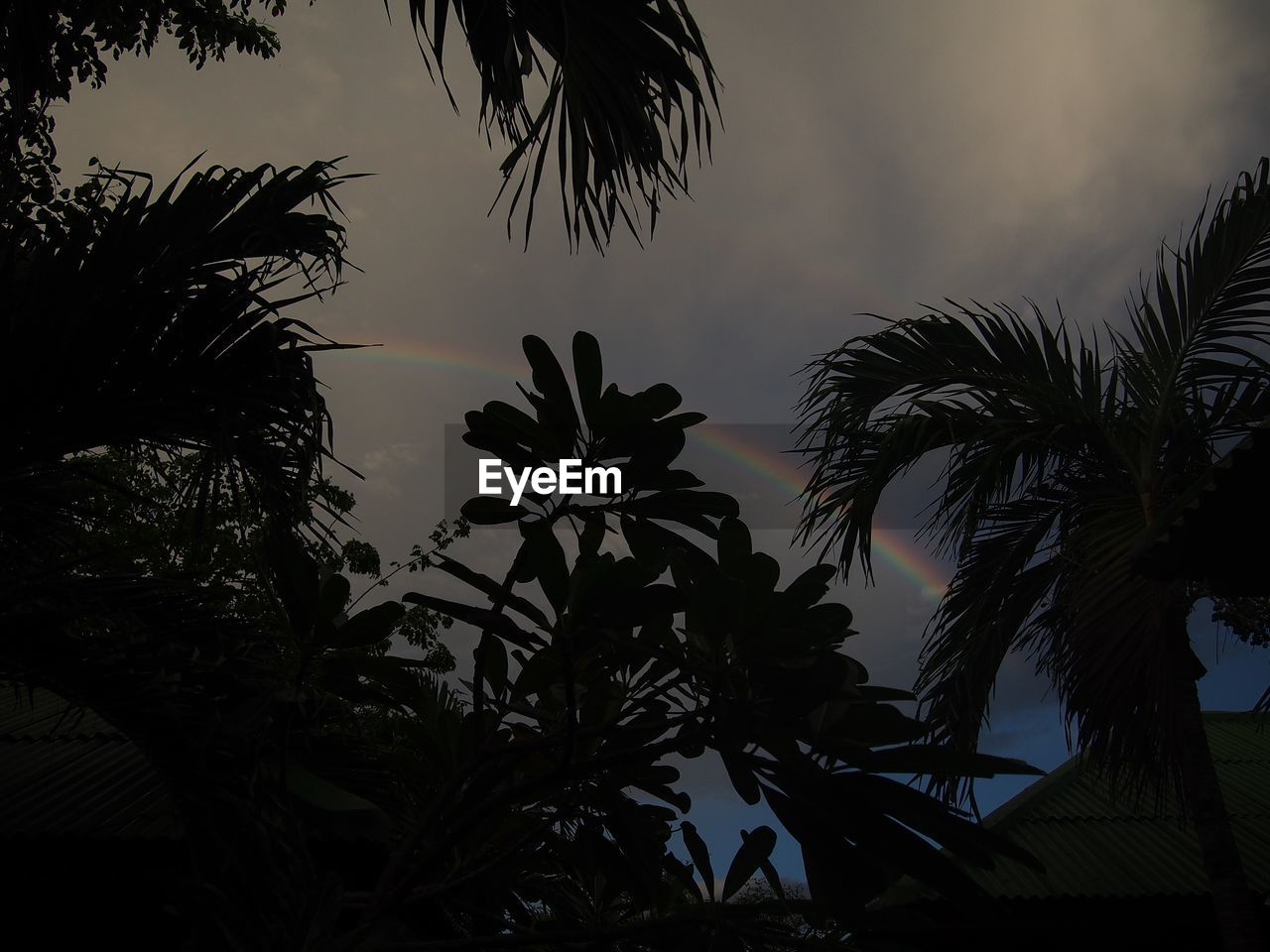 tropical climate, plant, palm tree, growth, tree, sky, silhouette, leaf, beauty in nature, nature, low angle view, no people, palm leaf, tranquility, sunset, scenics - nature, tranquil scene, cloud - sky, plant part, outdoors, coconut palm tree, tropical tree
