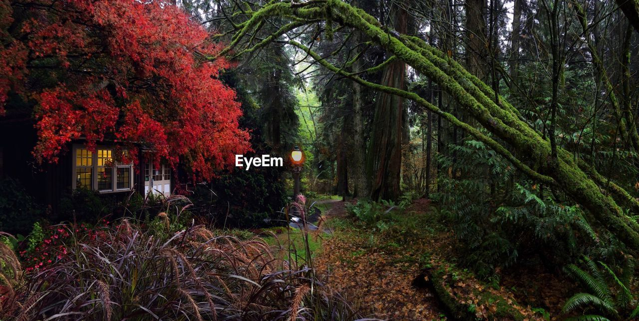 TREES AND PLANTS IN FOREST