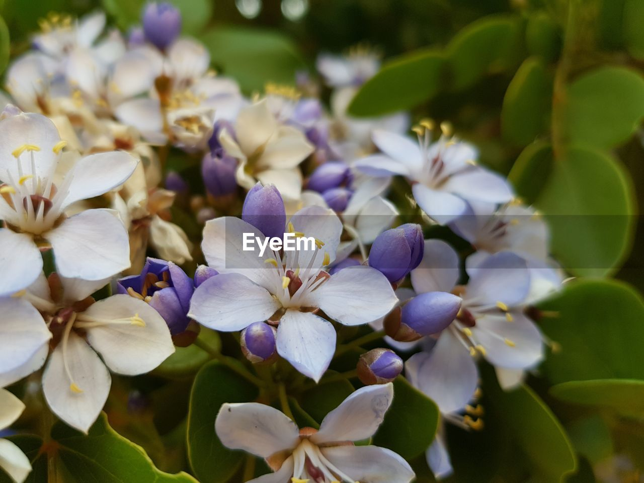 flower, beauty in nature, petal, fragility, nature, growth, freshness, plant, purple, flower head, no people, day, outdoors, blooming, close-up, periwinkle