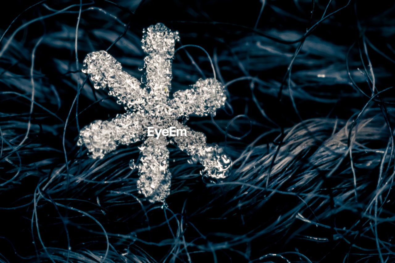 christmas, no people, christmas decoration, nature, night, winter, outdoors, christmas ornament, illuminated, cold temperature, close-up, beauty in nature, sea life, snowflake