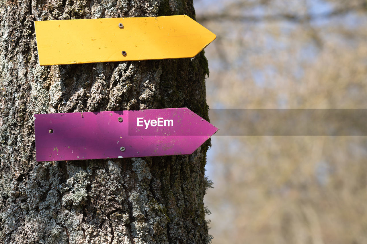 close-up, focus on foreground, no people, day, trunk, tree trunk, textured, tree, pink color, nature, yellow, plant, outdoors, rough, wood - material, sign, communication, metal, number, shape