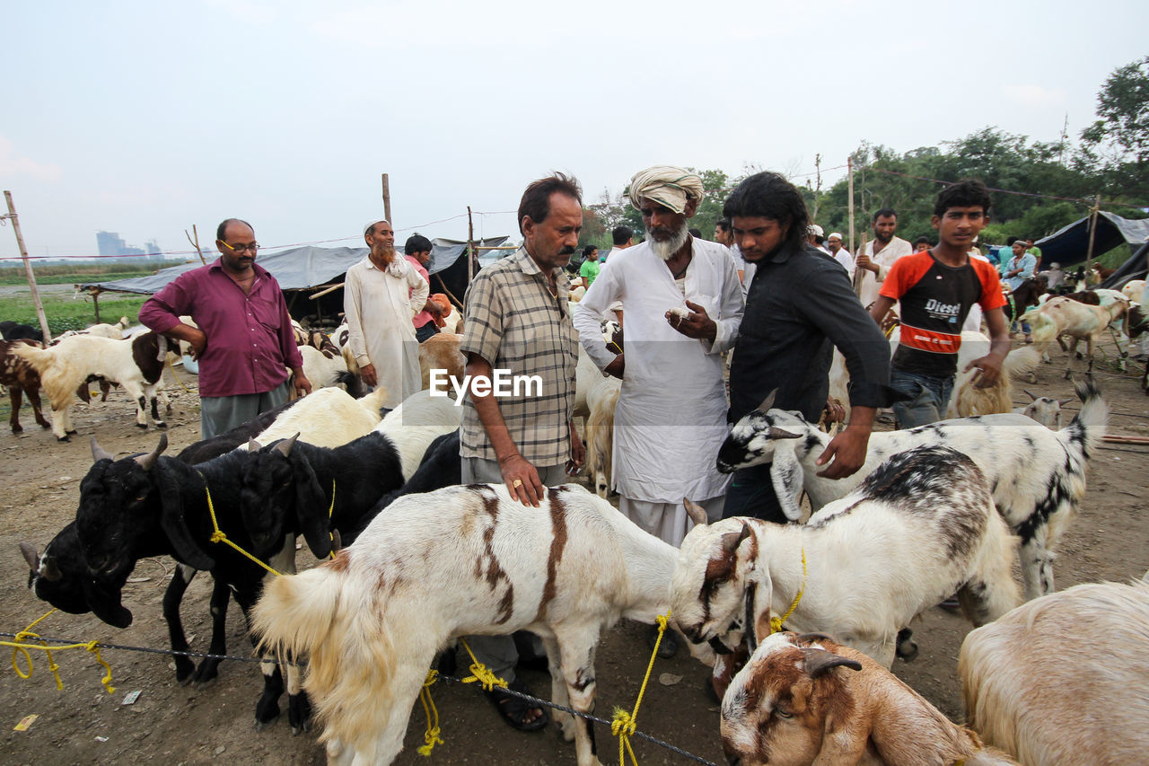 real people, men, domestic animals, mammal, togetherness, livestock, outdoors, day, large group of people, lifestyles, adult, people