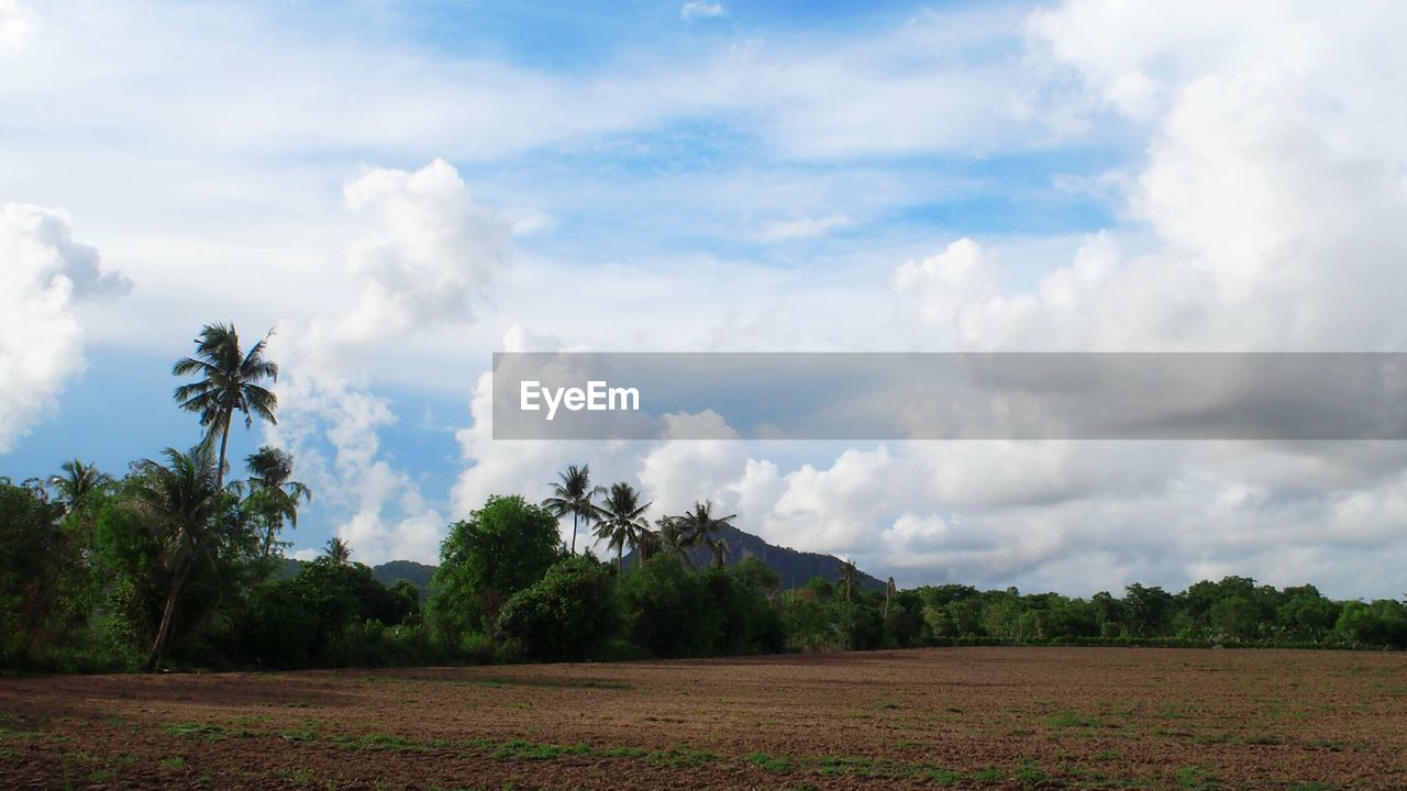 tree, cloud - sky, sky, tranquility, beauty in nature, scenics, field, tranquil scene, nature, landscape, day, no people, agriculture, outdoors, growth, rural scene, palm tree